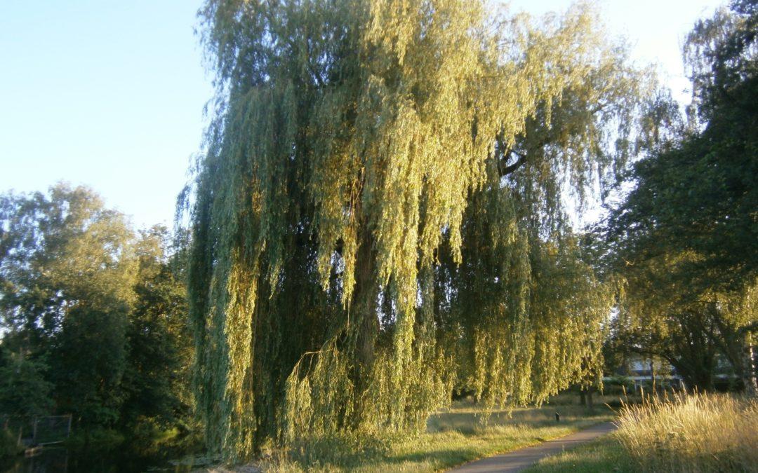 De wilgenboom bij de Dommel, Selissen